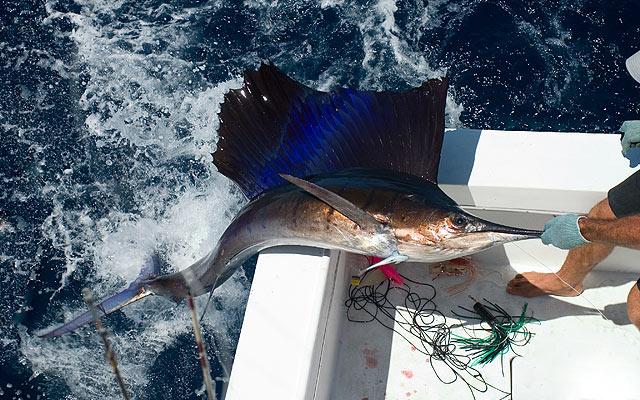 Schwertfisch angeln im Mittelmeer und der Südsee