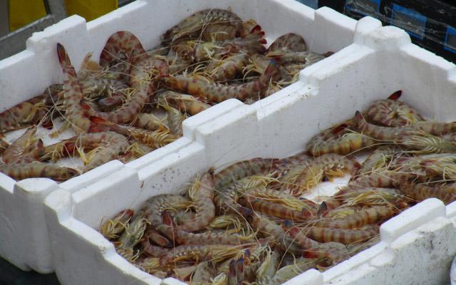 Garnelen und Krabben